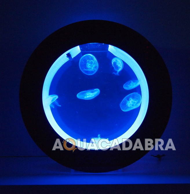 orbita cubo pulse meduse acquari specialista led design moderno serbatoio marine ebay. Black Bedroom Furniture Sets. Home Design Ideas