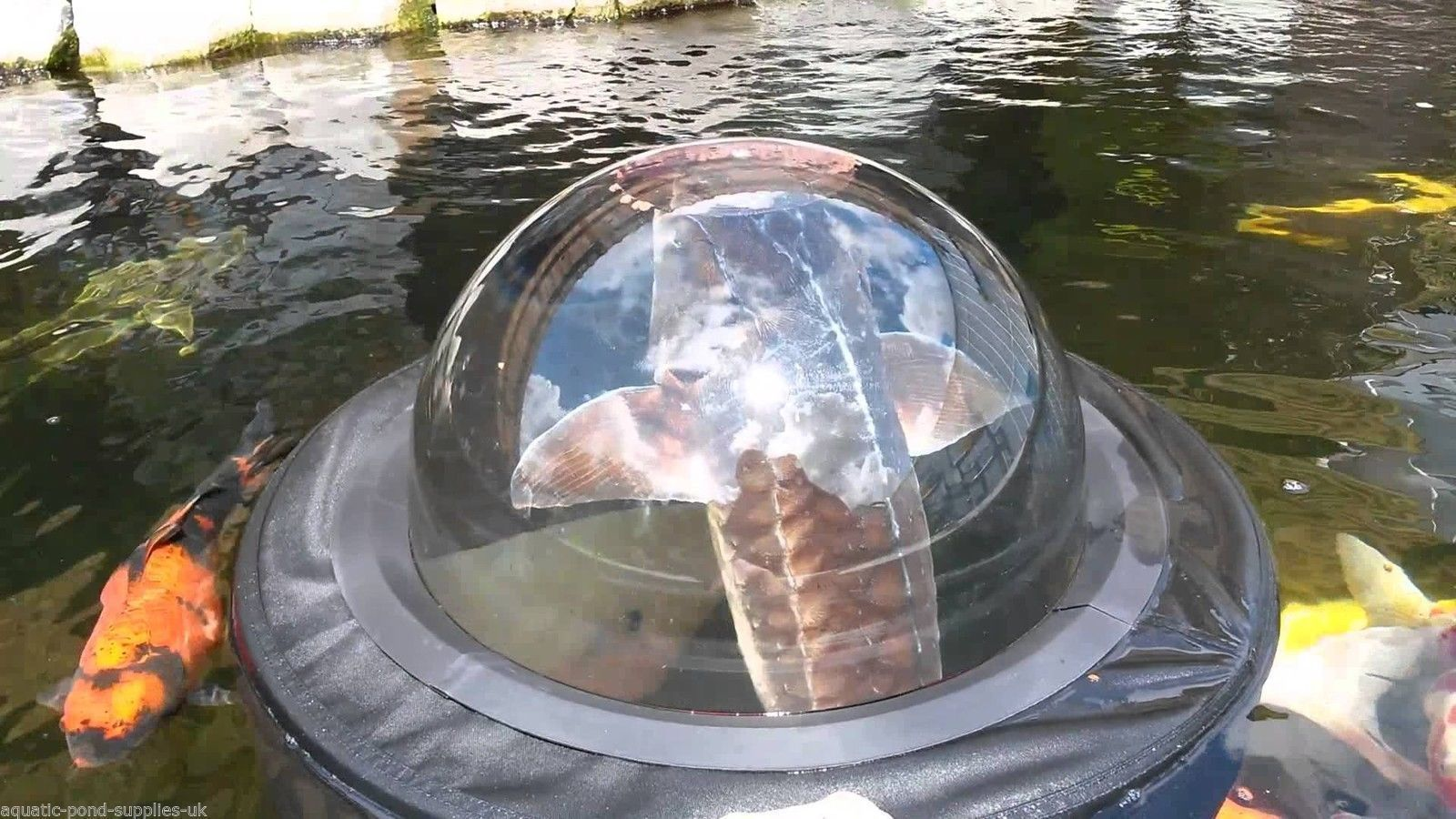 Medium velda floating fish sphere dome pond water garden for Koi pond fish
