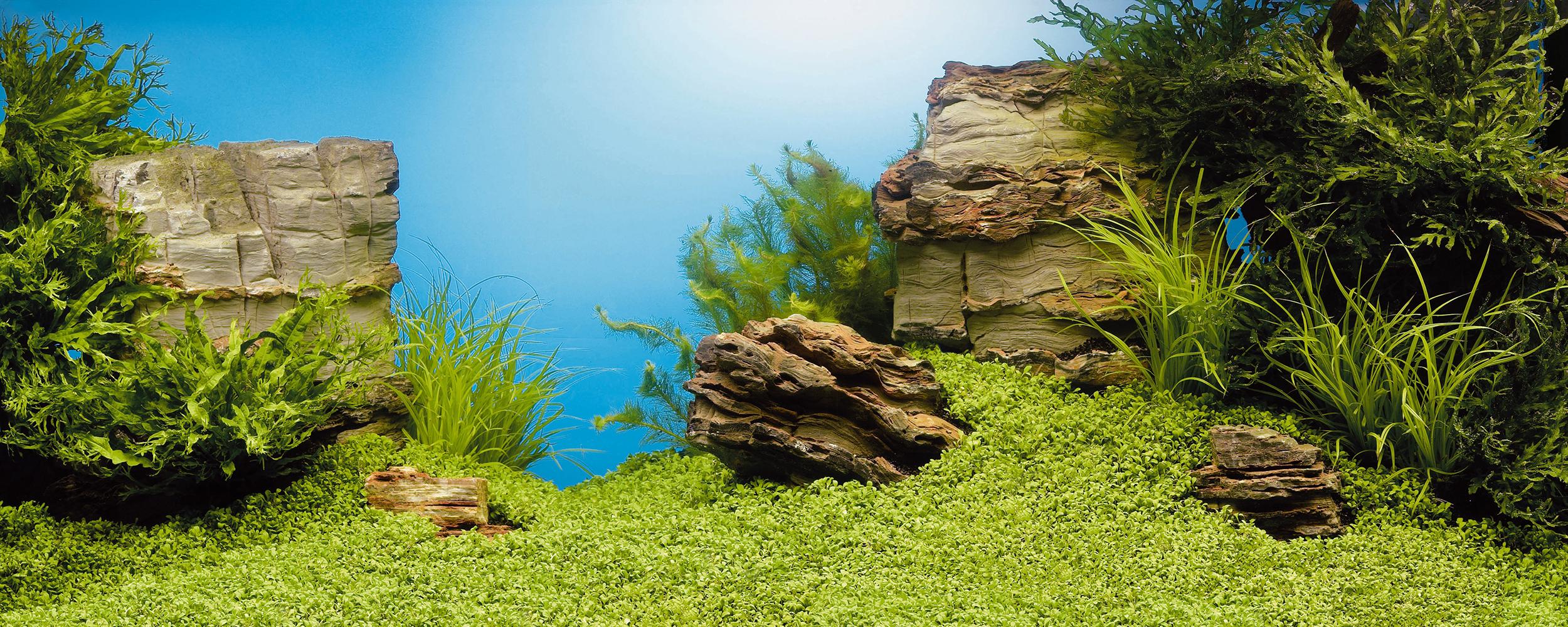 Juwel large double sided poster aquarium background l fish for Fish tank backdrop