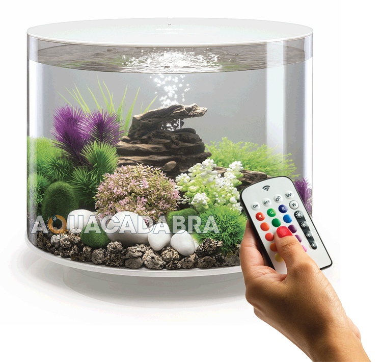 Oase biorb tube aquariums 15l 30l mcr led lighting filter for Order aquarium fish online