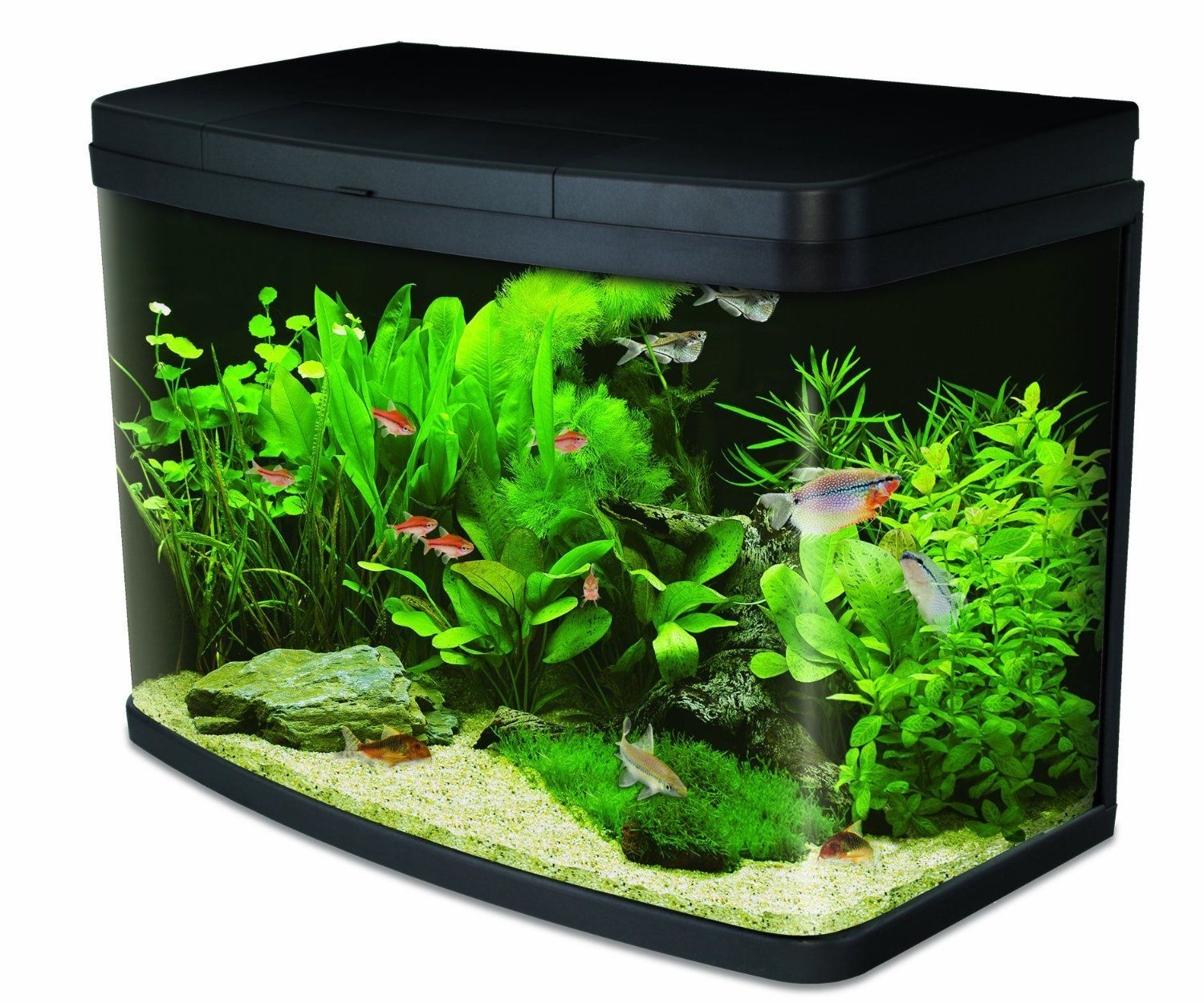 Interpet insight 64 litre aquarium fish tank complete set for Fish tank aquarium