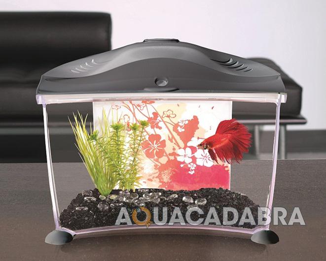 Marina betta aquarium starter kits white graphite siamese for Fish tank starter kit