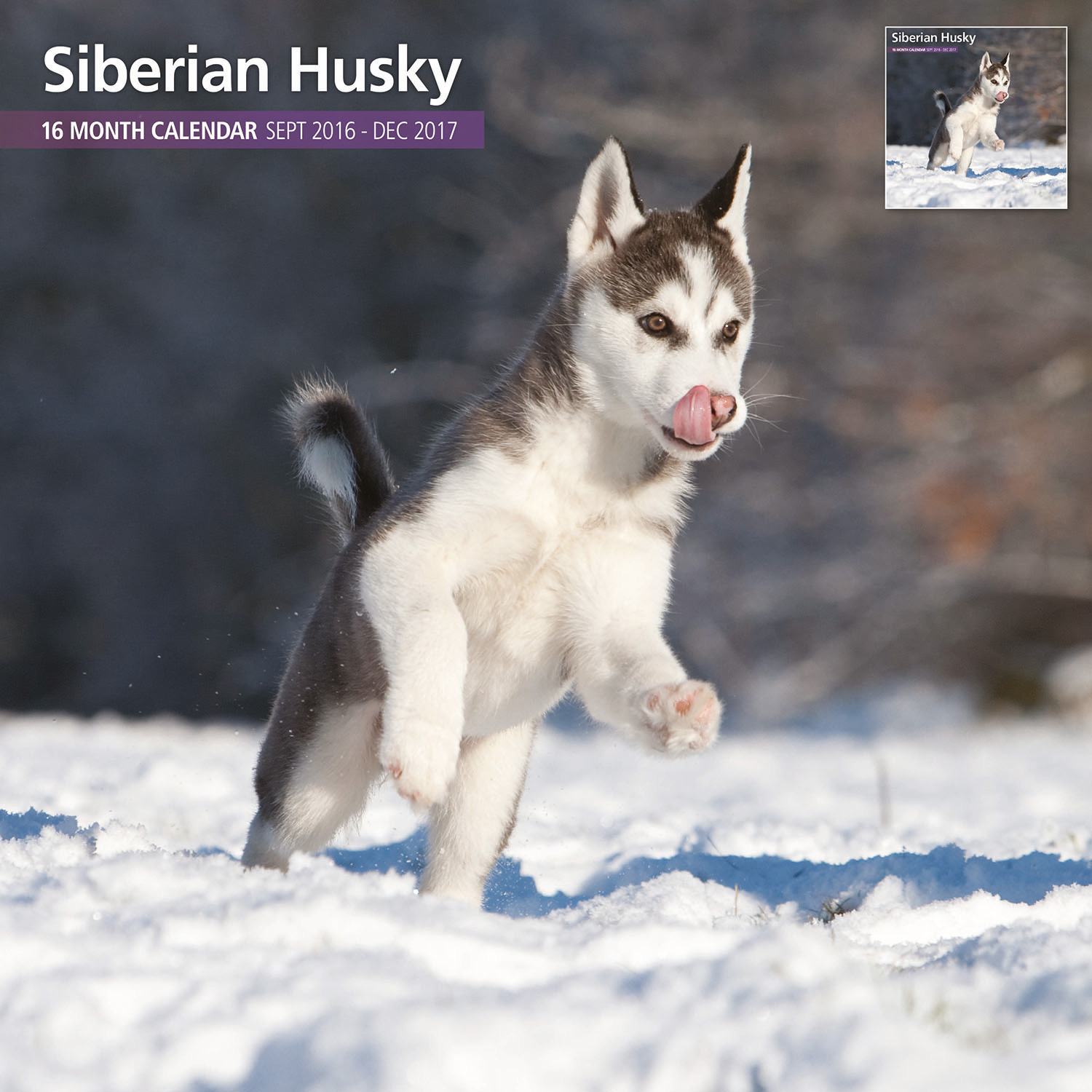 Siberian Husky - 2017 16 Month Traditional Calendar • £9.99 1 of 3 ...