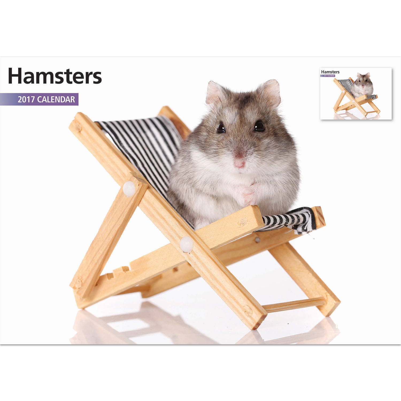Adult dwarf hamster pron images