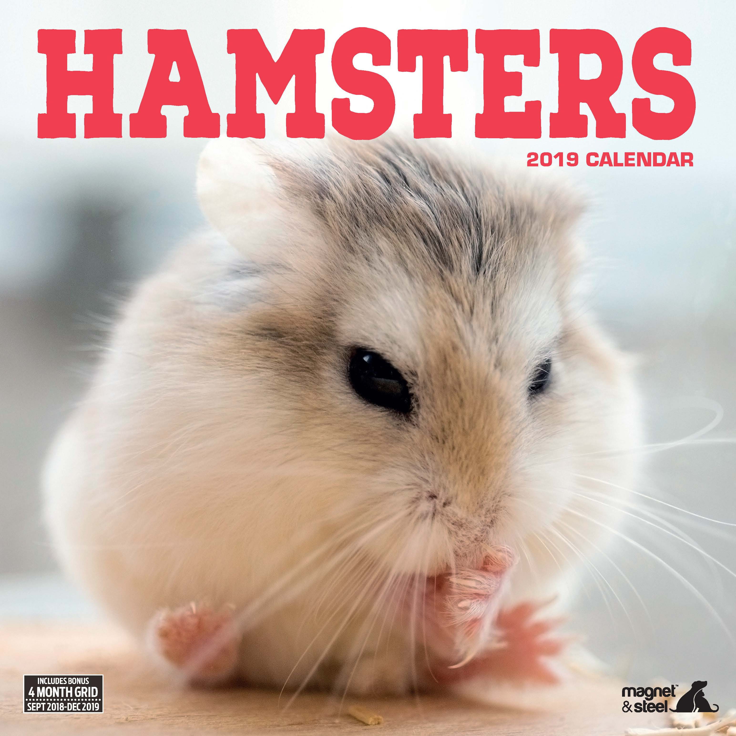 Hamsters 2019 Calendar