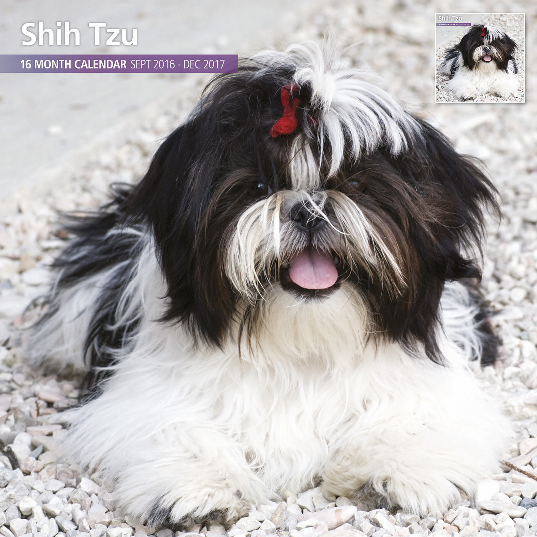 Details about Shih Tzu - 2017 16 Month Traditional Calendar