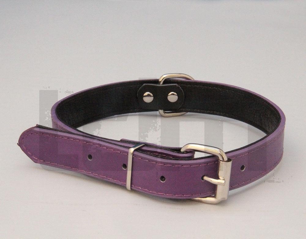 E Collar Dog Uk For Sale