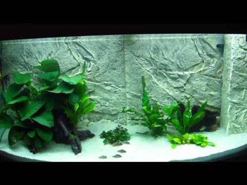 Juwel Cliff 600 Light Or Dark Background Fish Tank