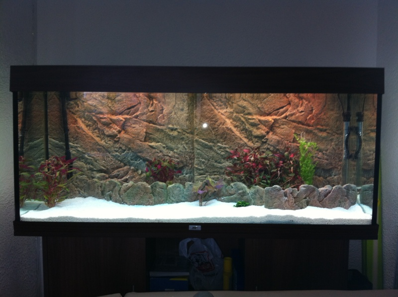 Juwel cliff 600 light or dark background fish tank for Aquarium decoration sealant