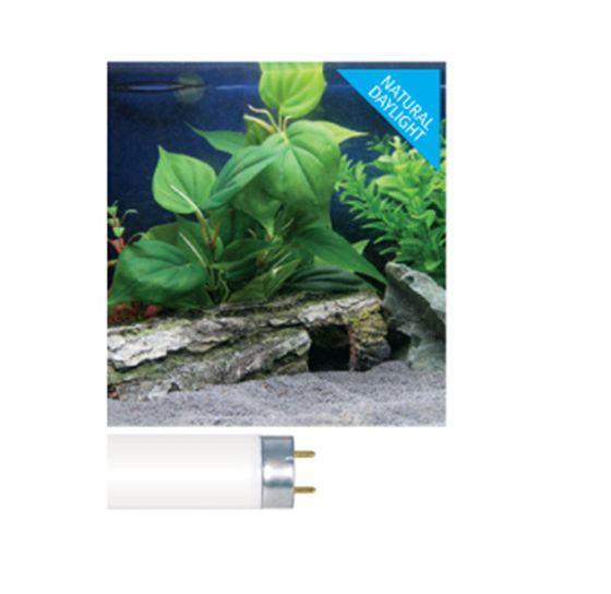 Arcadia Classica Fish Tank Light Tube Bulb T8 Tropical