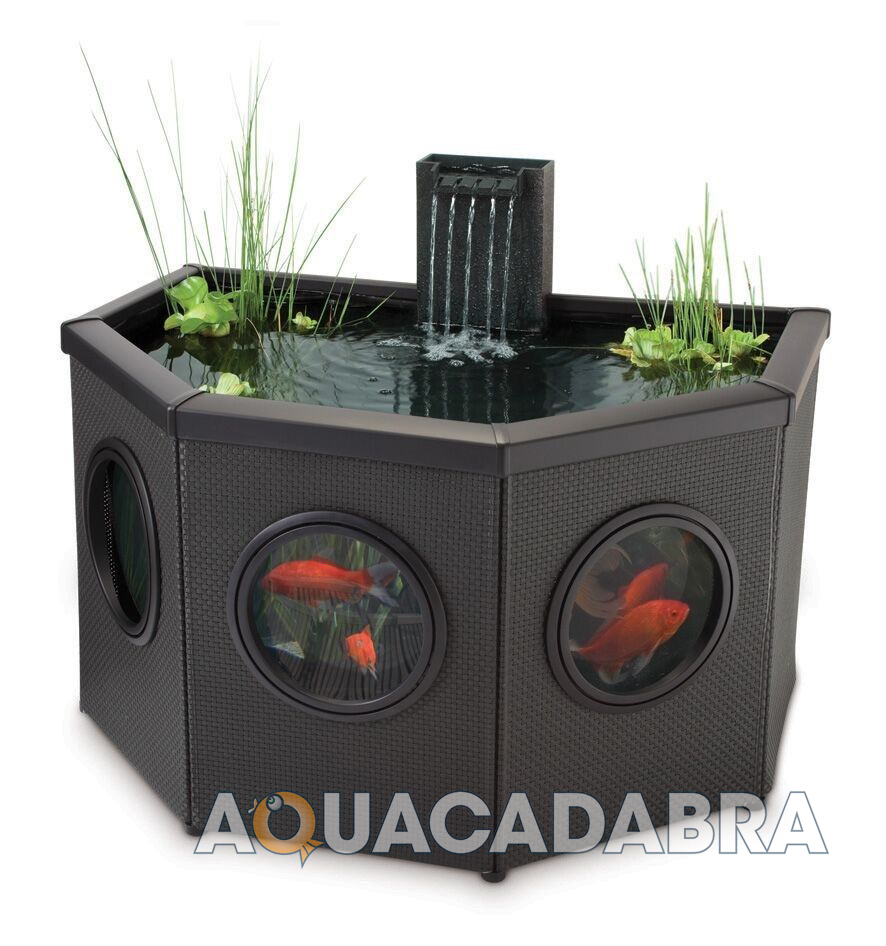 blagdon affinity mocha fish pond koi coldwater patio