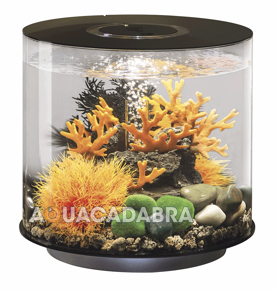 Biorb tube 15l black led aquarium lighting filter all in for 1 fish 2 fish store