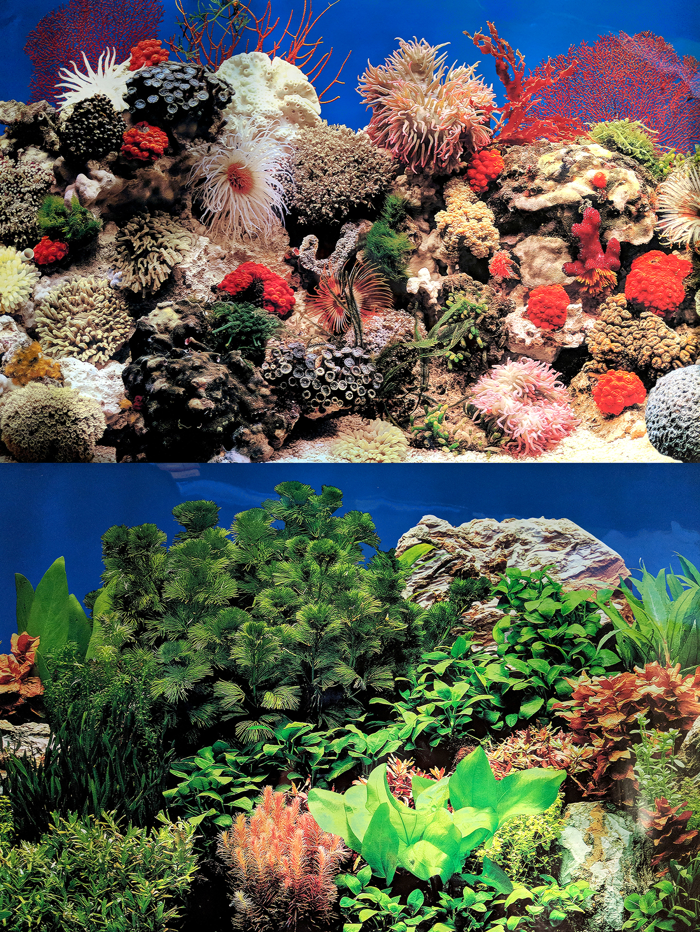 Aquarium Background Double Sided Repeating Coral Seascape Marine Fresh Fish Tank