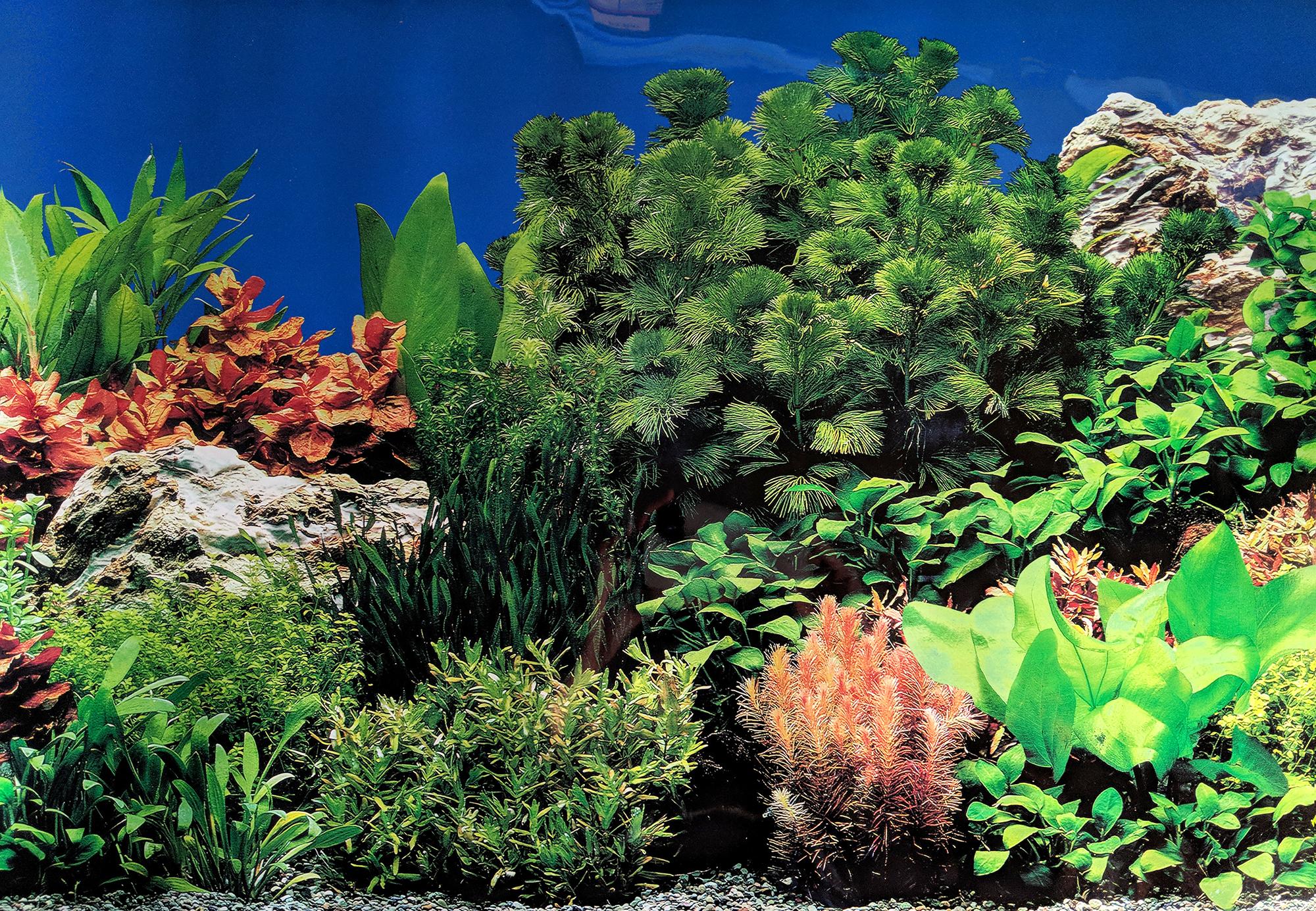 Fondo Acuario Doble Cara Repitiendo Coral Paisaje Marino