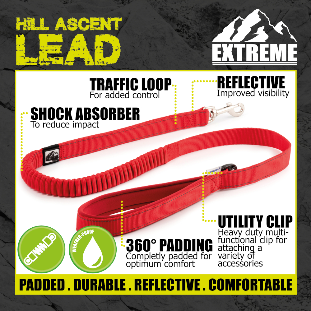 thumbnail 23 - Ancol-Dog-Leads-Puppy-Fashion-Extreme-Bungee-Durable-Nylon-Leash-Funky-Designs